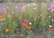 Wild Flower Mixes