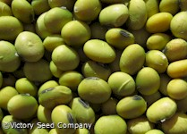 Geant Vert Soybean<br>>Sold Out for 2015