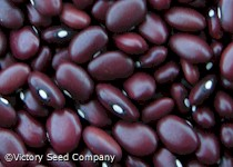 Montezuma Red Bush Dry Bean