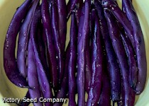 Purple Dove Bush Bean