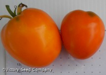 Faribo Golden Heart Tomato