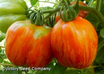 Striped Cavern Tomato