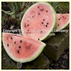Winter Queen Watermelon