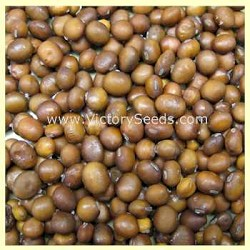 Brun Matif Rouest Soybean