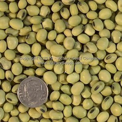 Hidatsa Soybean<br>Sold Out for 2015