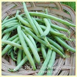 Slenderette Bush Green Bean