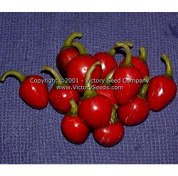 Large Red Cherry Sweet Pepper