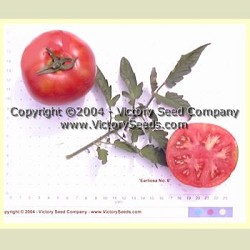 Earliosa No 6 Tomato