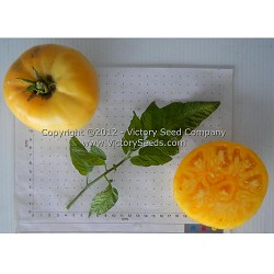 Lillian's Yellow Heirloom Tomato