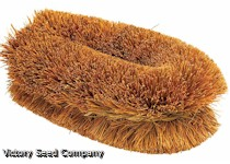 Tawashi-style Scrub Brush, Traditional 4-Inch Natural Coir Bristle