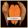 Vardaman Sweet Potato Plants