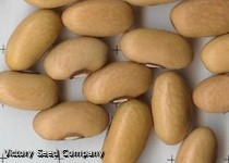 Arikara Yellow Bush Dry Bean