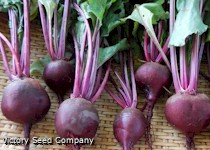Boltardy Beet<br><b>SOLD OUT - Please Check Back</b>
