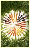 A rainbow of carrot colors - Image by Stephen Ausmus, courtesy of the USDA ARS