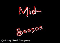 Main Crop<br>Mid-Season