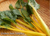 Orange Fantasia Swiss Chard