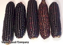 Calhoun Creek Red Dent Corn<br><b>SOLD OUT for 2020</b>