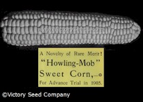 Howling Mob Sweet Corn<br><b>SOLD OUT</b>