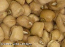 Colossus Southern Pea<br><b>SOLD OUT for 2020</b>