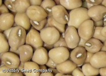 Mississippi Silver Southern Pea