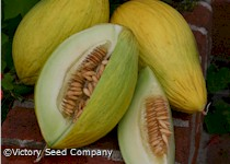 Amarillo Oro Melon<br><b>SOLD OUT</b>