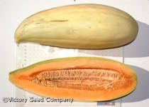 Banana Melon<br><b>SOLD OUT for 2020</b>