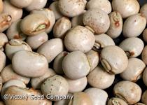 Pigeon Pea<br></b>Sold Out</b>