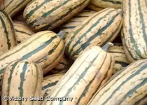 Honey Boat Delicata Winter Squash