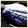 Hubbard, Blue - Winter Squash