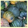 Kogigu Winter Squash