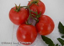 Basrawya Tomato<br><b>Coming Soon</b>