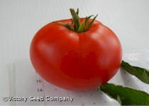 Bison Tomato<br><b>Coming Soon</b>