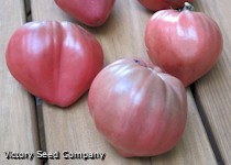 Cherokee Purple Heart Tomato