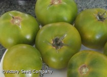 Dwarf Grandpa Gary's Green Tomato<br><b>Coming Soon</b>