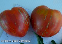 Dwarf Speckled Heart Tomato