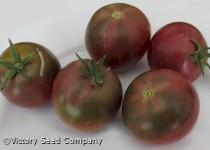 Dwarf Velvet Night Tomato