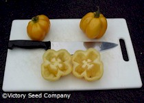 Yellow Stuffer Tomato