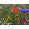 Texas-Oklahoma Wildflower Mix<br><b>SOLD OUT - Please Check Back</b>