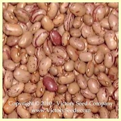 Cranberry Bush Dry Bean<br><b>Sold Out</b>