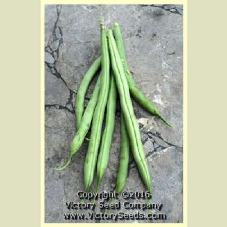 Topcrop (Top Crop) Bush Green Bean