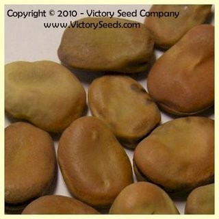 Aquadulce Fava Bean<br><b>SOLD OUT for 2020</b>