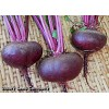 Crosby Egyptian Beet<br><b>Please Check Back</b>