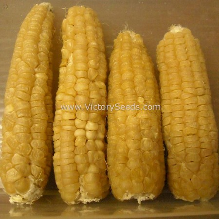 Aunt Mary's Sweet Corn<br><b>SOLD OUT for 2020</b>