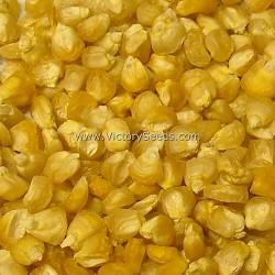 Double Standard Sweet Corn<br><b>Sold Out</b>