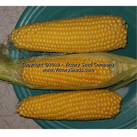 True Gold Sweet Corn<br><b>SOLD OUT for 2020</b>