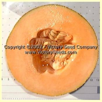 Burrell's Jumbo Muskmelon<br><b>SOLD OUT for 2020</b>