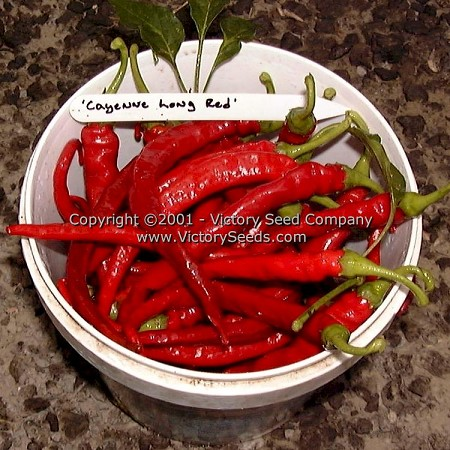 Cayenne Long Red Hot Pepper