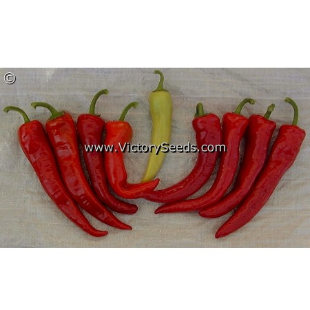 Hungarian Sweet Pepper