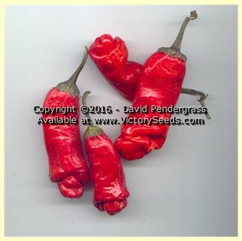 Peter Pepper - Hot Pepper<br><b>SOLD OUT for 2020</b>