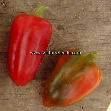 Pimento Pepper<br><b>SOLD OUT - Please Check Back</b>